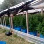 22.01.2020 Drogas: Operación Isla Verde en Lavalleja
